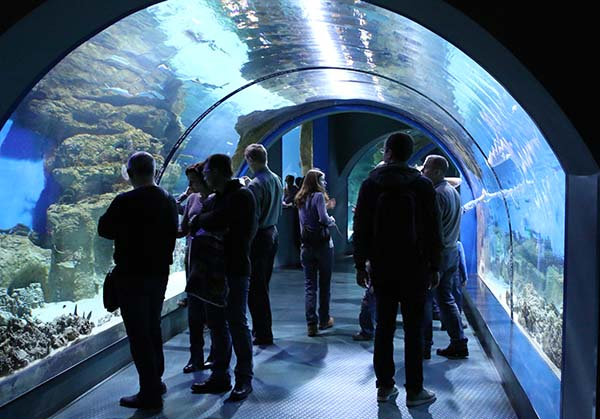 Люди в стеклянном туннеле