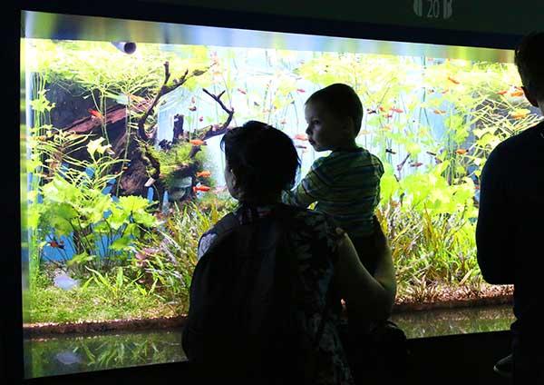 Мать с сыном рассматривает рыб