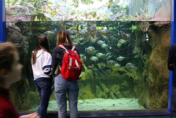 Две девушки у аквариума