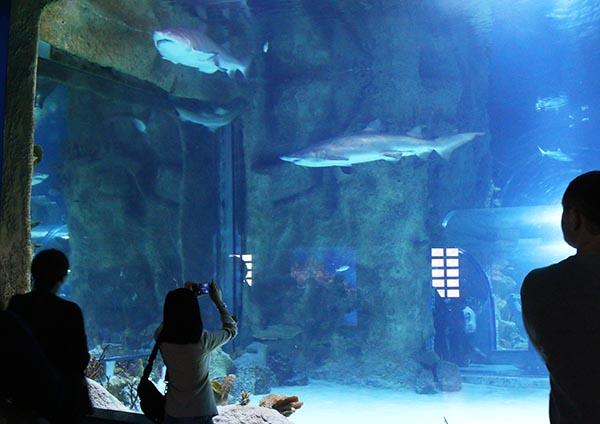 Девушка фотографирует акул
