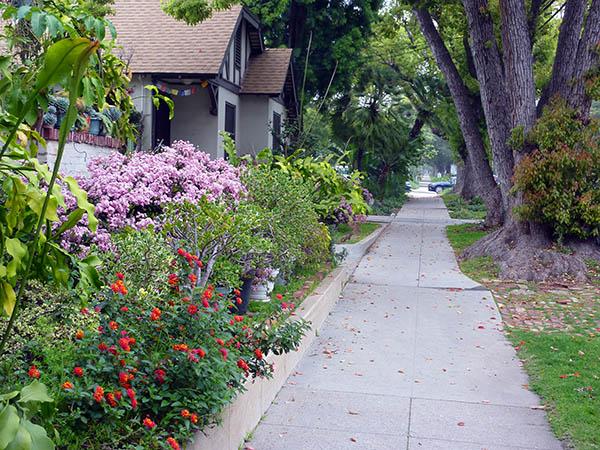 цветы вдольдороги