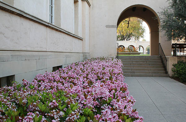 цветы при входе в Калтех