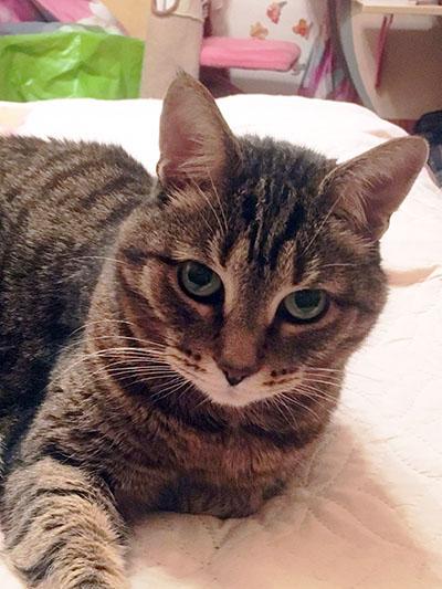 кот Тихон