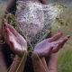 Счастье – тонкая паутинка любви