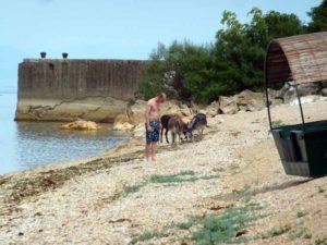 пляж с ослами и туристом