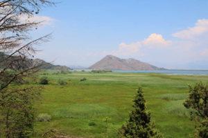 болотистая часть Скадарского озера
