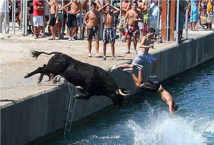 бык прыгает за людьми в воду