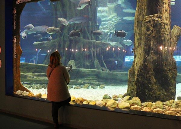 Женщина любуется рыбами