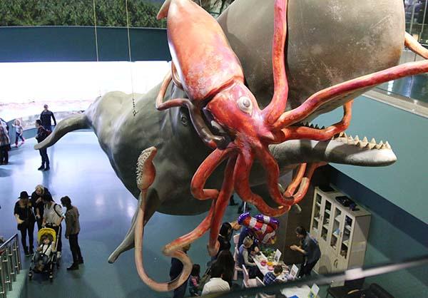 Схватка кашалота и гигантского кальмараа