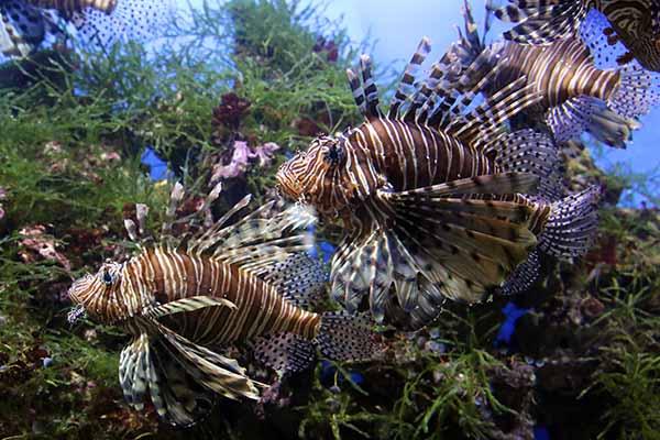 Рыбы-бабочки