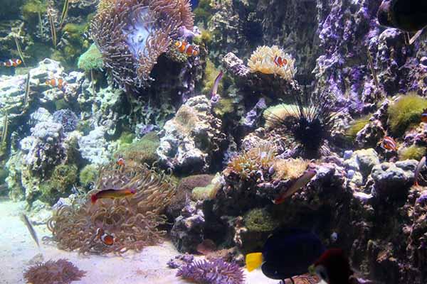 коралловые жители