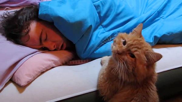 кот рядом со спящим
