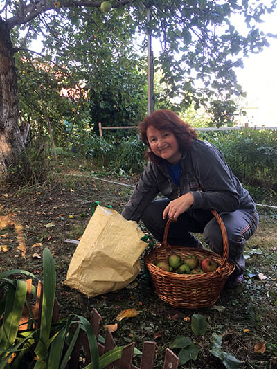 Инна собирает яблоки