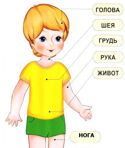 карта тела